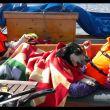 Agnes, Lilly og skipshunden Madde slapper av på Færder, St. Ha